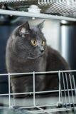 Le chat dans le lave-vaisselle Photographie stock libre de droits