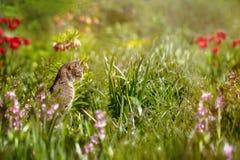 Le chat dans le lit de fleur chasse sur la souris Photographie stock libre de droits