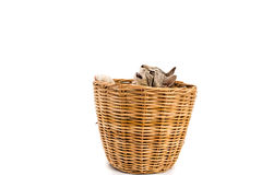 Le chat dans le panier, regard dehors, a isolé le fond blanc Photos stock