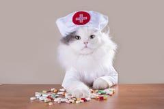 Le chat dans un costume du docteur donne la médecine photographie stock