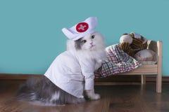 Le chat dans un costume du docteur traite le tigre images libres de droits