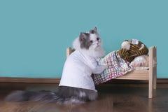 Le chat dans un costume du docteur traite le tigre photos libres de droits