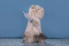 Le chat dans un docteur de costume indique comment traiter l'épidémie de l'infl photo libre de droits