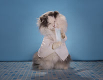 Le chat dans un docteur de costume indique comment traiter l'épidémie de l'infl photo stock