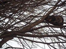 Le chat de Brown se cache sur la branche d'arbre photographie stock