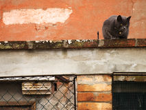 Le chat de Burano Photographie stock libre de droits