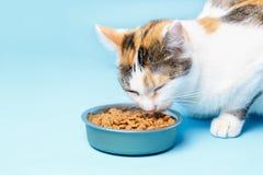 Le chat de Cory est appétissant mange d'un plat sur un backgroun bleu image libre de droits