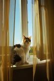 Le chat de couleur de ttree de gingembre se repose sur l'image de tonalité chaude de filon-couche de fenêtre Concept d'animal fam Photographie stock