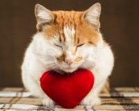 Le chat de gingembre de deux couleurs médite près du coeur de jouet de peluche de mensonges Photographie stock libre de droits