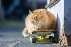 Le chat de gingembre s'étend sur une planche à roulettes sur la rue dans le jour d'été Photographie stock