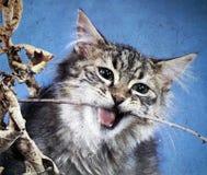Le chat de guerrier dans une affiche illustration de vecteur