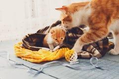 Le chat de mère vient au chaton Image libre de droits
