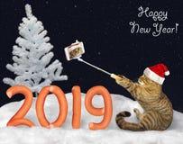 Le chat 2019 de nouvelle année fait le selfie 3 photographie stock libre de droits