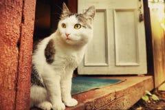 Le chat de pays se reposent sur le porche en bois de maison images libres de droits