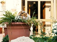 Le chat de rue se cache dans un pot de fleur Photographie stock