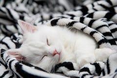 Le chat de sommeil Image libre de droits