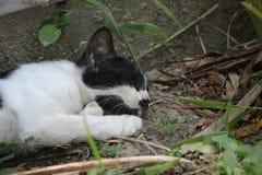 Le chat de sommeil photographie stock libre de droits