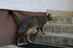 Le chat de tigre monte les escaliers à la cour Images stock