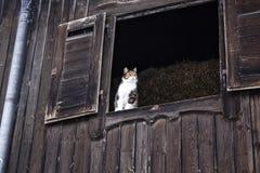 Le chat de tigre regarde hors de la fenêtre dans le plancher supérieur d'une grange, Bavière, Allemagne photo libre de droits