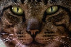 Le chat de yeux regardant quelque chose photo stock