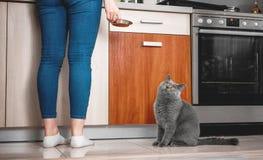 le chat demande à manger, chat affamé photo stock