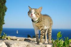 Le chat des vacances Photographie stock libre de droits