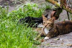 Le chat deux jouent joyeux comme fond Photographie stock libre de droits
