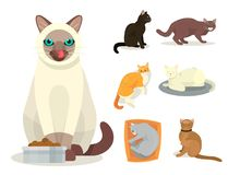 Le chat différent multiplie l'illustration féline de minou d'animal familier de jeu de caractères cattish animal mignon mignon de Photo libre de droits