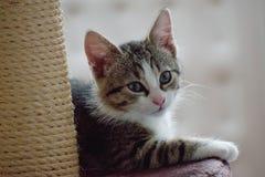 Le chat domestique Photo stock