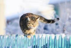 Le chat domestique rayé drôle mignon progresse en avant le long de l'astuce d'une barrière en bois dans un village clair d'hiver  photographie stock libre de droits