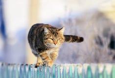 Le chat domestique rayé drôle mignon progresse le long d'une barrière en bois dans un village dans un jardin d'hiver clair photo stock
