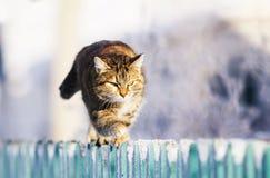 Le chat domestique rayé drôle mignon progresse le long d'une barrière en bois dans un village dans un jardin d'hiver clair image stock