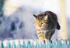 le chat domestique rayé drôle progresse en avant le long de l'astuce d'une barrière en bois dans un village clair d'hiver le jard image libre de droits