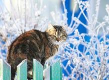le chat domestique rayé drôle se repose sur une barrière en bois dans un village dans un jardin d'hiver clair parmi la gelée photo stock