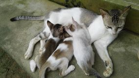 Le chat dorment photographie stock