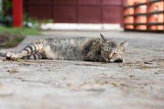 Le chat dorment confortablement Photographie stock