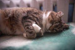 Le chat dort avec les jambes pliées près de la batterie photographie stock libre de droits