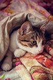 Le chat dort dans le lit Photographie stock