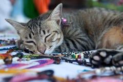 Le chat dort dans les perles Photographie stock