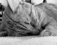 Le chat dort photos stock