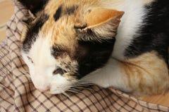 Le chat dort sur le ciment au parc Photographie stock