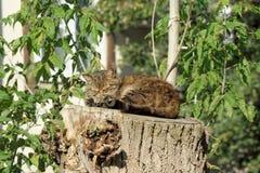 Le chat dort sur un haut chanvre d'un grand bois scié Photo stock