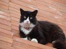 Le chat du voisin stearing à vous du toit du voisin photo stock