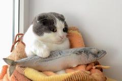 Le chat enveloppé dans une couverture chaude garde de grands poissons congelés Images libres de droits