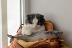 Le chat enveloppé dans une couverture chaude garde de grands poissons congelés Photographie stock