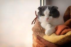 Le chat a enveloppé le plaid à carreaux chaud se reposant sur un filon-couche de fenêtre Image libre de droits