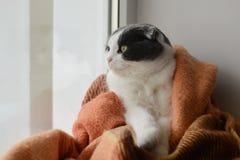 Le chat a enveloppé le plaid à carreaux chaud se reposant sur un filon-couche de fenêtre Photographie stock