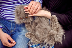 Le chat est aux mains des hommes et des femmes Image libre de droits
