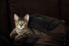 Le chat est hors du sac images stock