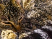 Le chat est prêt pour le petit somme Photos libres de droits